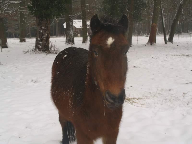 """jusqu'au 24 mars pour voter pour le concours photo """" vos chevaux dans la neige 2013 """" n°1 Petit_11"""