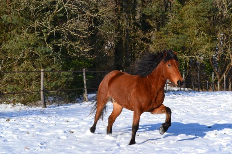 """jusqu'au 24 mars pour voter pour le concours photo """" vos chevaux dans la neige 2013 """" n°1 Photo_12"""
