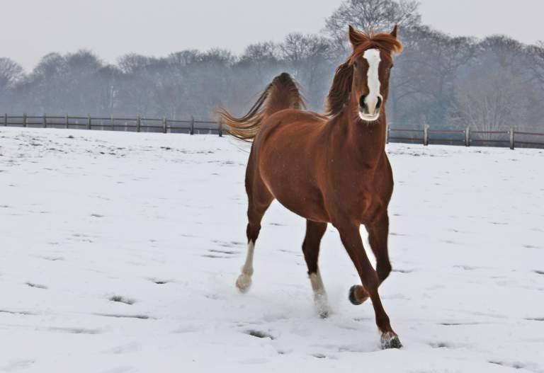 """jusqu'au 24 mars pour voter pour le concours photo """" vos chevaux dans la neige 2013 """" n°1 Photo_13"""