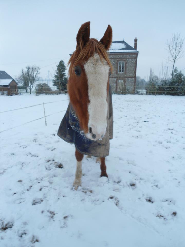 """jusqu'au 24 mars pour voter pour le concours photo """" vos chevaux dans la neige 2013 """" n°1 Sam_vi11"""
