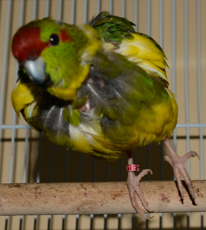 Fientes dans le nid avec les BB Paulo_10