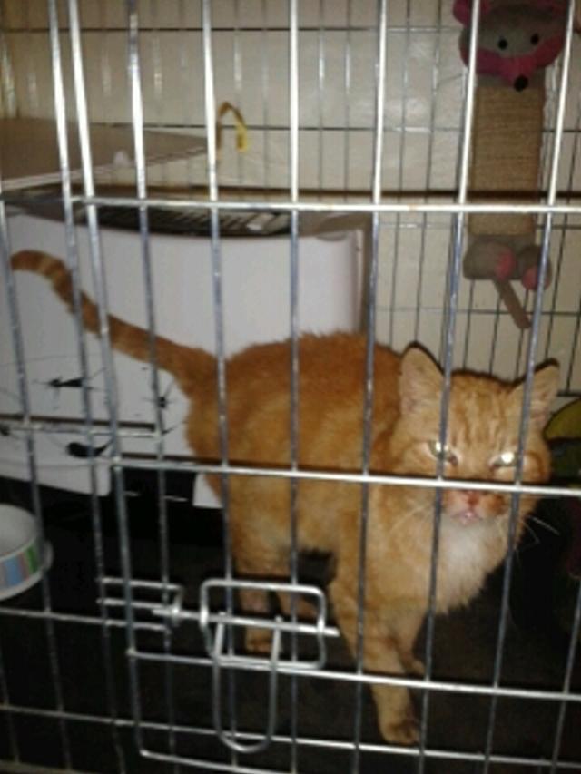 Garfield, Mâle européen (01/01/2007) - FIV+ Photo_24