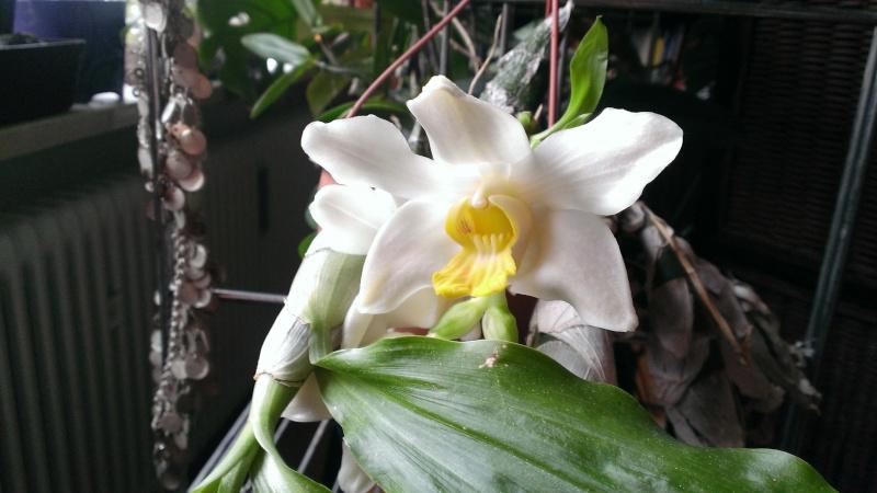 Wunderschöne Orchidee, aber wie heisst sie ? Wp_20111