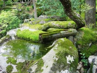 Un jardin pour la cascade Jardin10