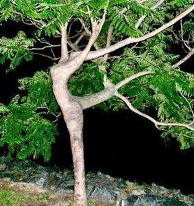 Un jardin pour la cascade Mere_n10