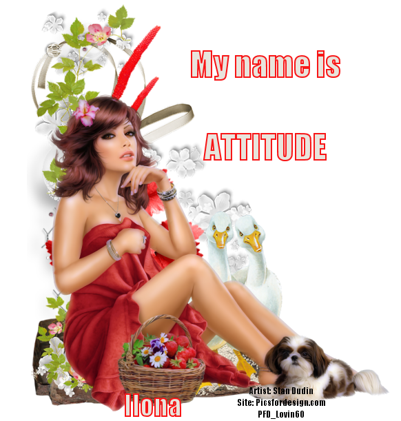 STRUT YOUR ATTITUDE Attitu81