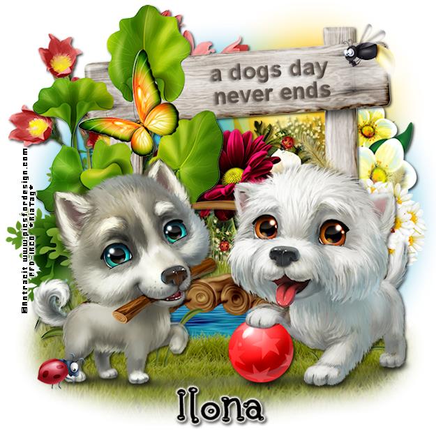 SHOW OFF ANIMAL TAGS Ilona320