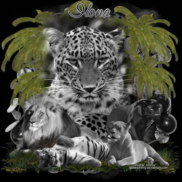 SHOW OFF ANIMAL TAGS Slt07211