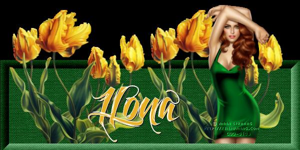 SEPTEMBER DAILY COLOUR Tulip_12