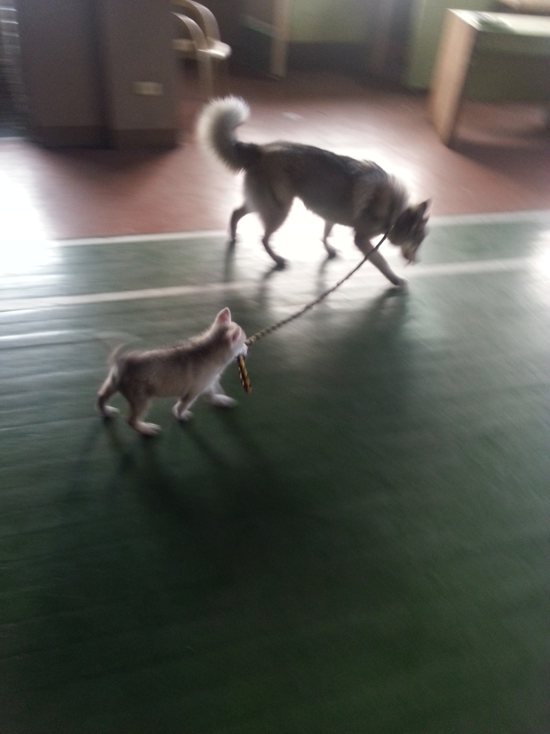 Raven and Erika, My Huskies :) 2013-012