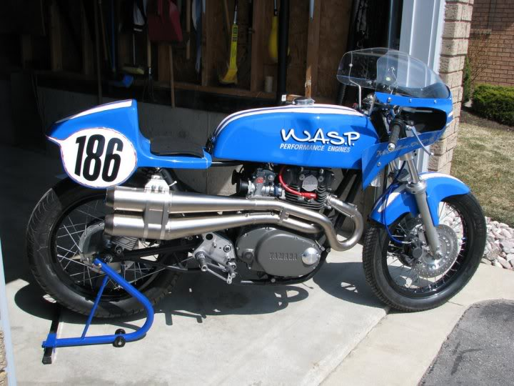 guêpe bleue Wasp6510