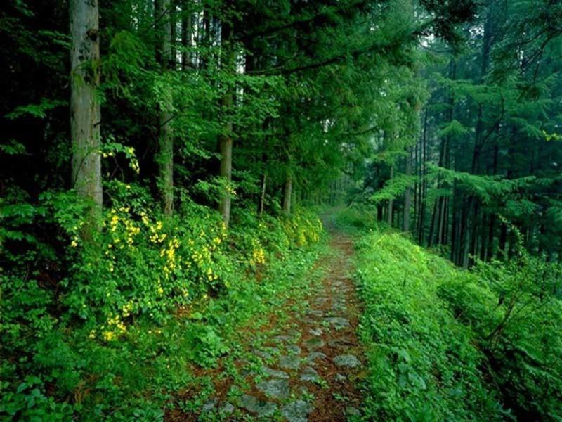 [Terminé] Entrainement en lisière de forêt [libre] Foret411