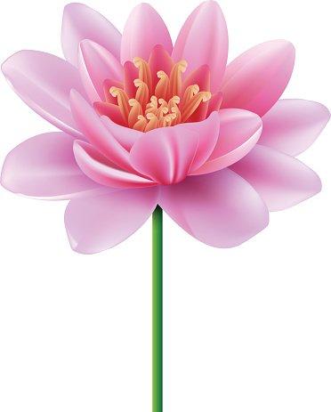 Эссенция Парящий Розовый Лотос 10123210