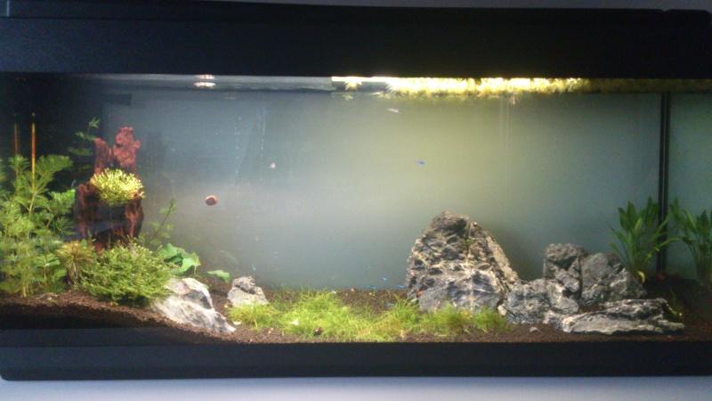 Débutant - Aquarium 132L Dsc_1310