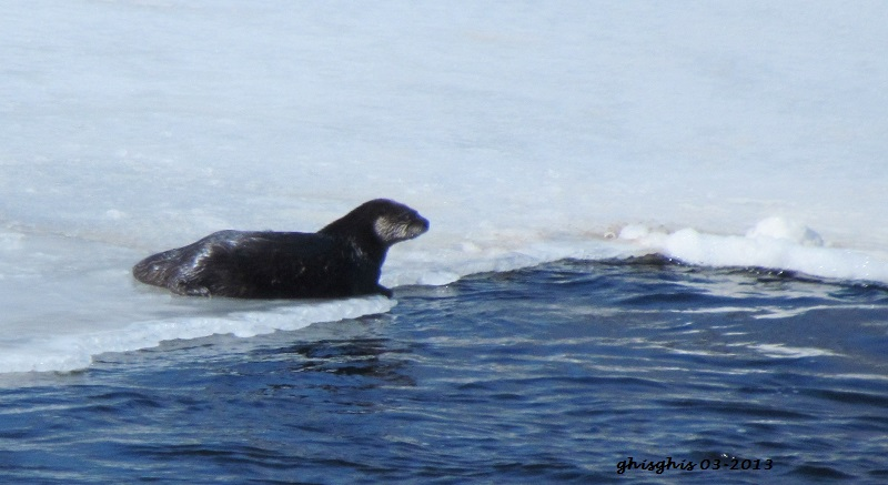 Loutre Img_9314
