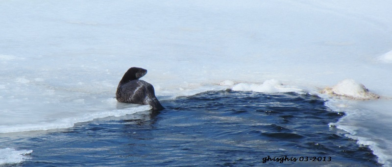 Loutre Img_9410