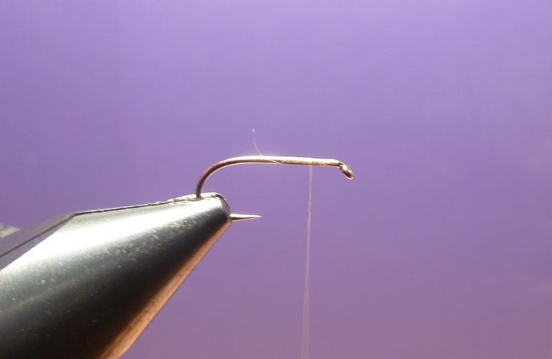 L'araignée chevreuil P1010210
