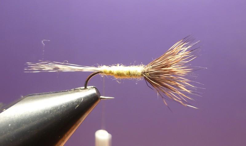 L'araignée chevreuil P1010213