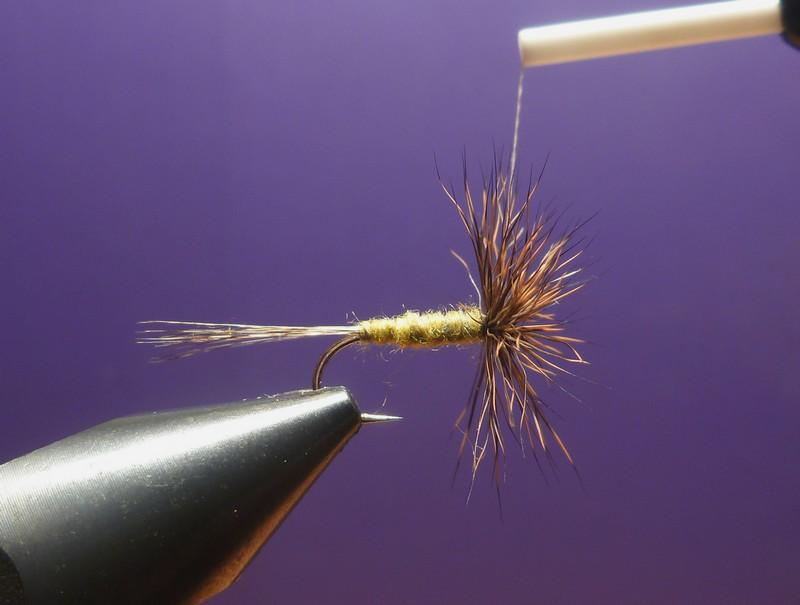 L'araignée chevreuil P1010214