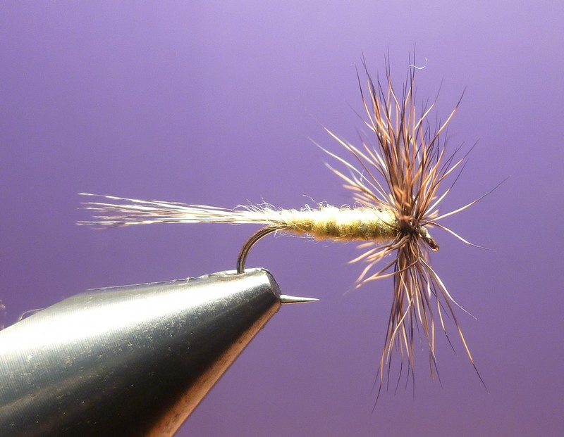L'araignée chevreuil P1010215