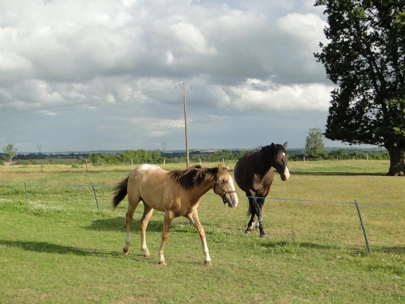 Mes chevaux... Dsc01210