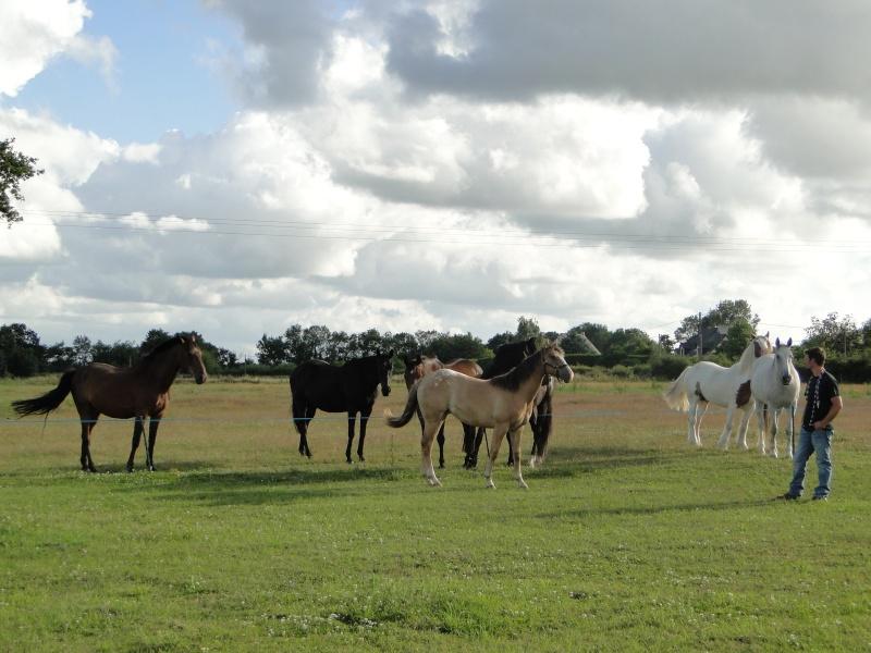 Mes chevaux... Dsc01212