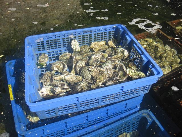 Produits de la mer!! Img_3217