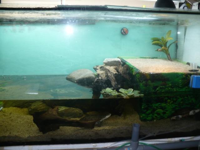 Aménagement du nouvel aquarium de ma Pelomedusa Plage11