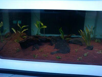 table basse aquarium Img_2012