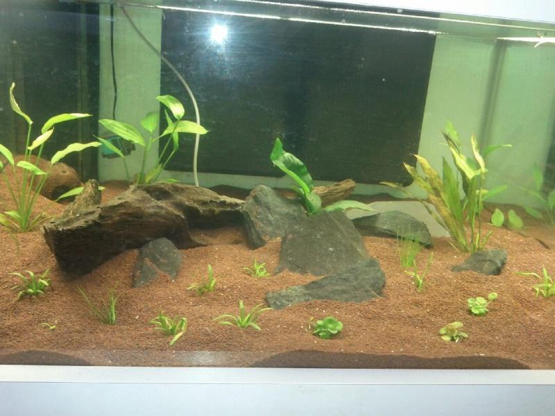 table basse aquarium Img_2013