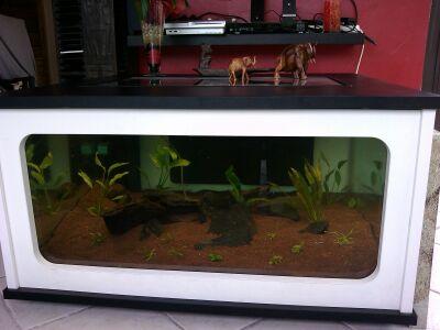 table basse aquarium Img_2014