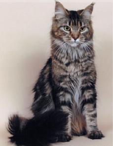 The Warrior Cats Brindl10