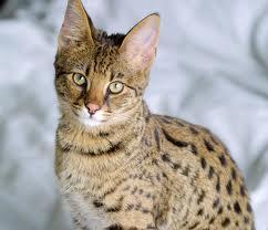 The Warrior Cats Flamep10