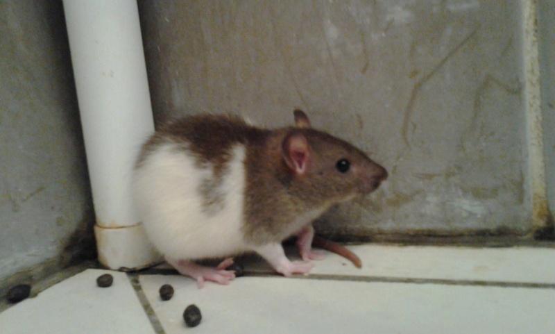 Basile! Le petit nouveau! Photo016