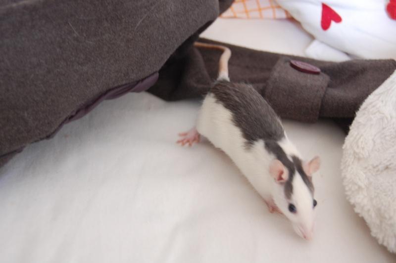 Tchouk et ses 9 adorables ratons husky à adopter sur lyon !!!!! Dsc_0013