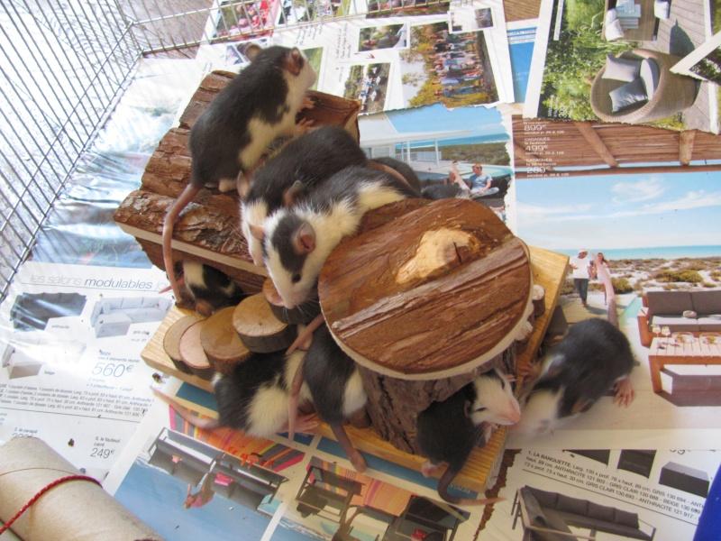 Tchouk et ses 9 adorables ratons husky à adopter sur lyon !!!!! Img_0116