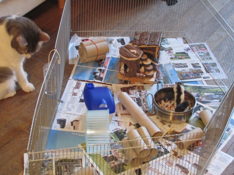 Tchouk et ses 9 adorables ratons husky à adopter sur lyon !!!!! Img_0117