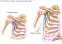 TREINO PEITORAL Muscul15