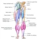 TREINO PERNAS Muscul18