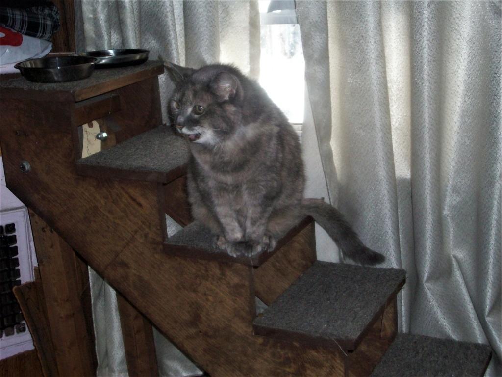 My poor kitty cat... 210_0012