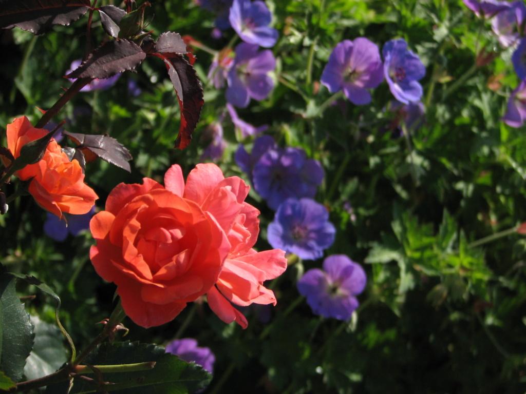 Flower Power! Img_8014