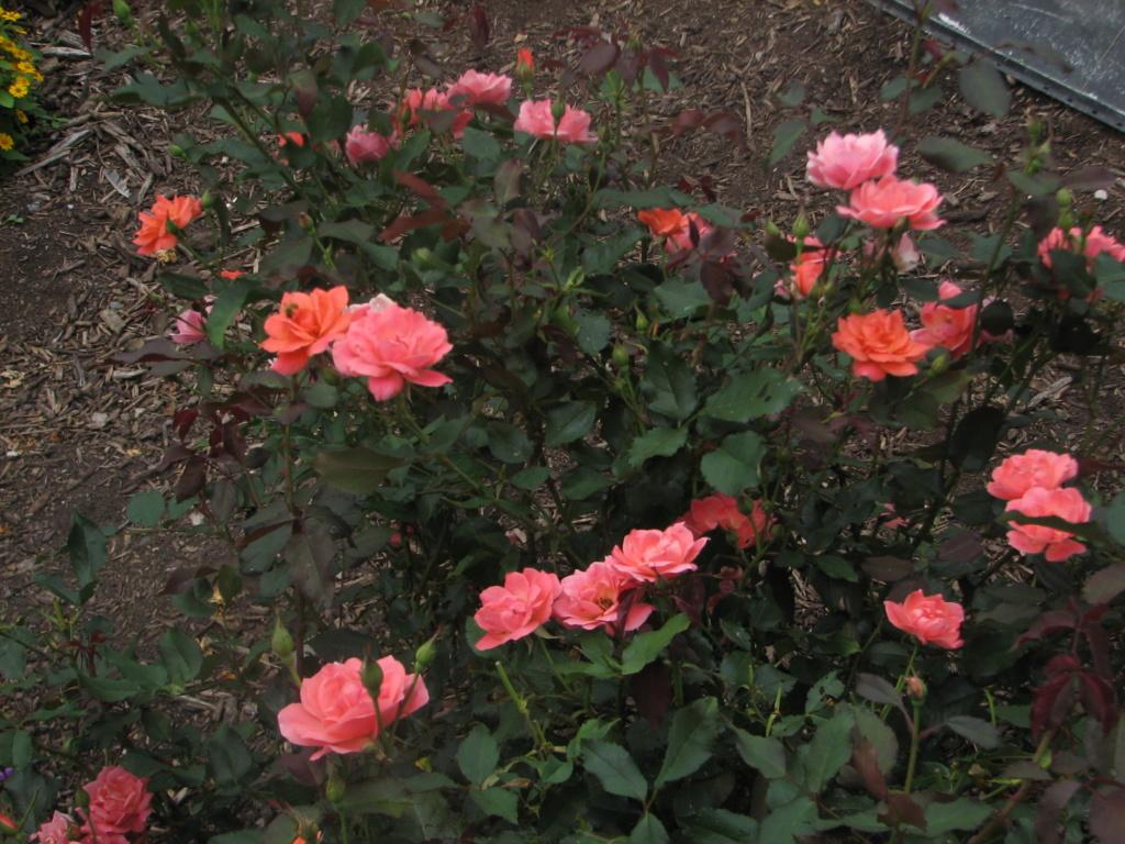 Flower Power! Img_8212