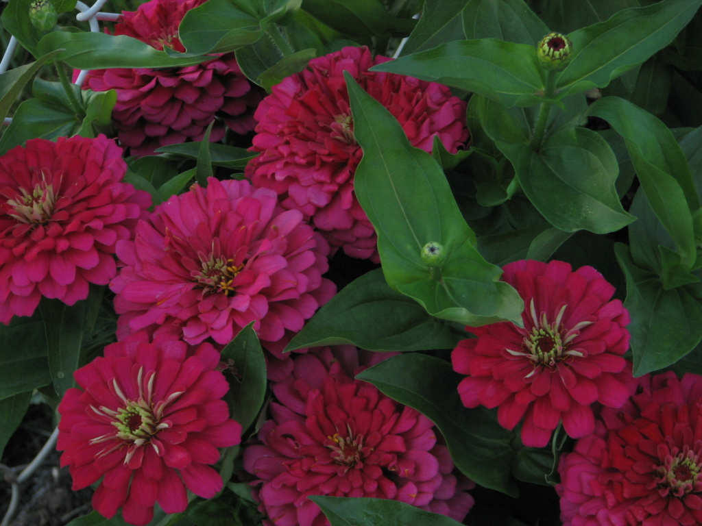 Flower Power! Img_8310