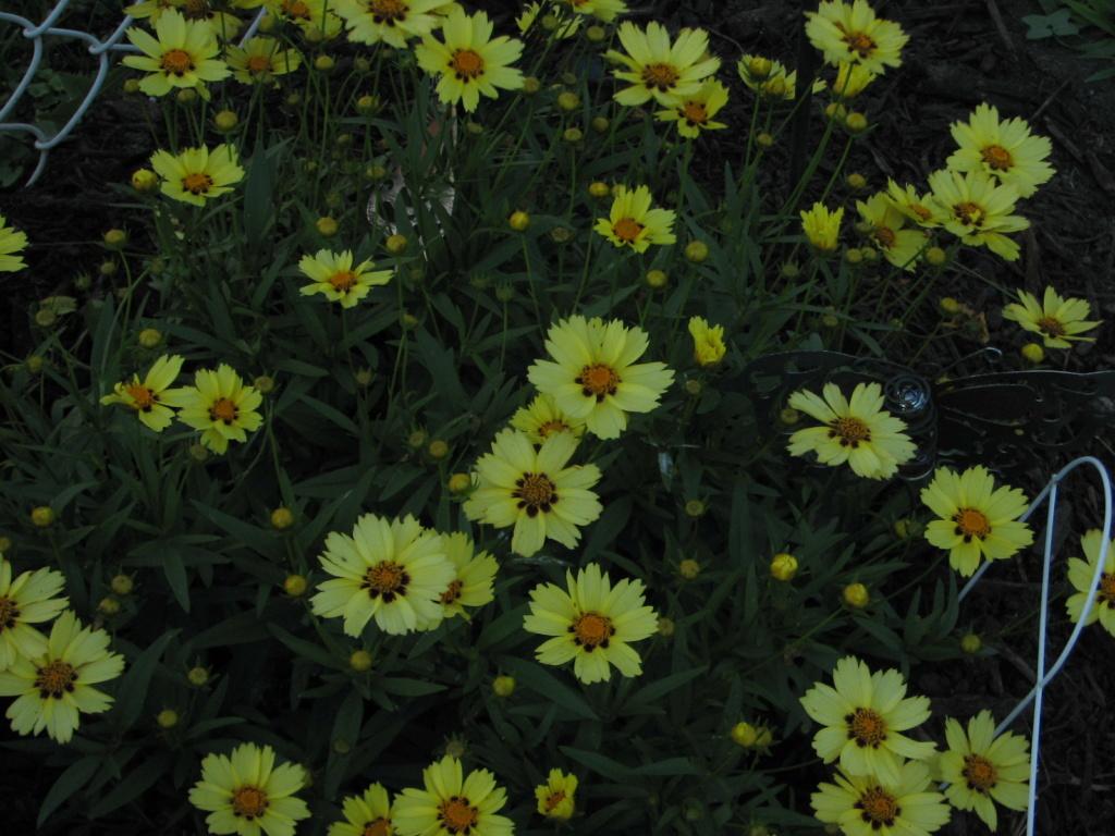 Flower Power! Img_8311