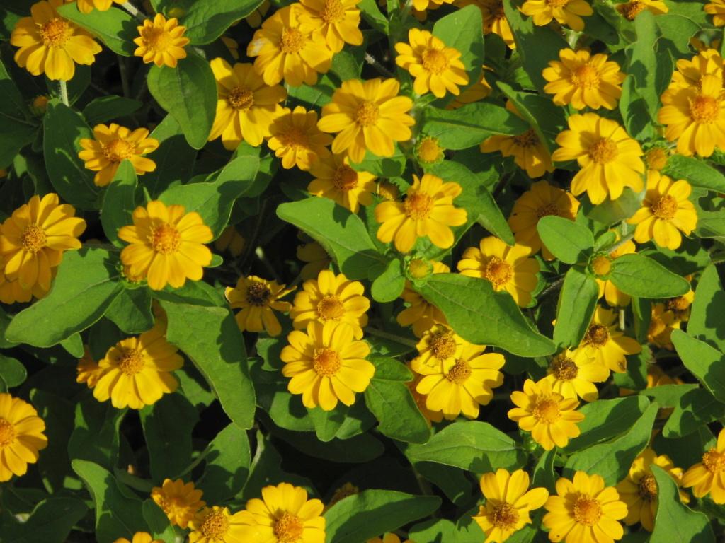 Flower Power! Img_8312