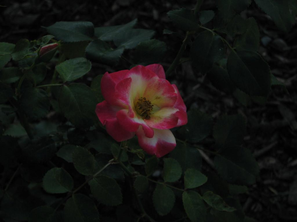 Flower Power! Img_8313