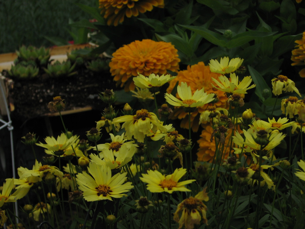 Flower Power! Img_8314