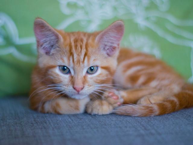Meet Fergus... Fergus10