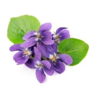 Chez Violette et Orchidée Violet10
