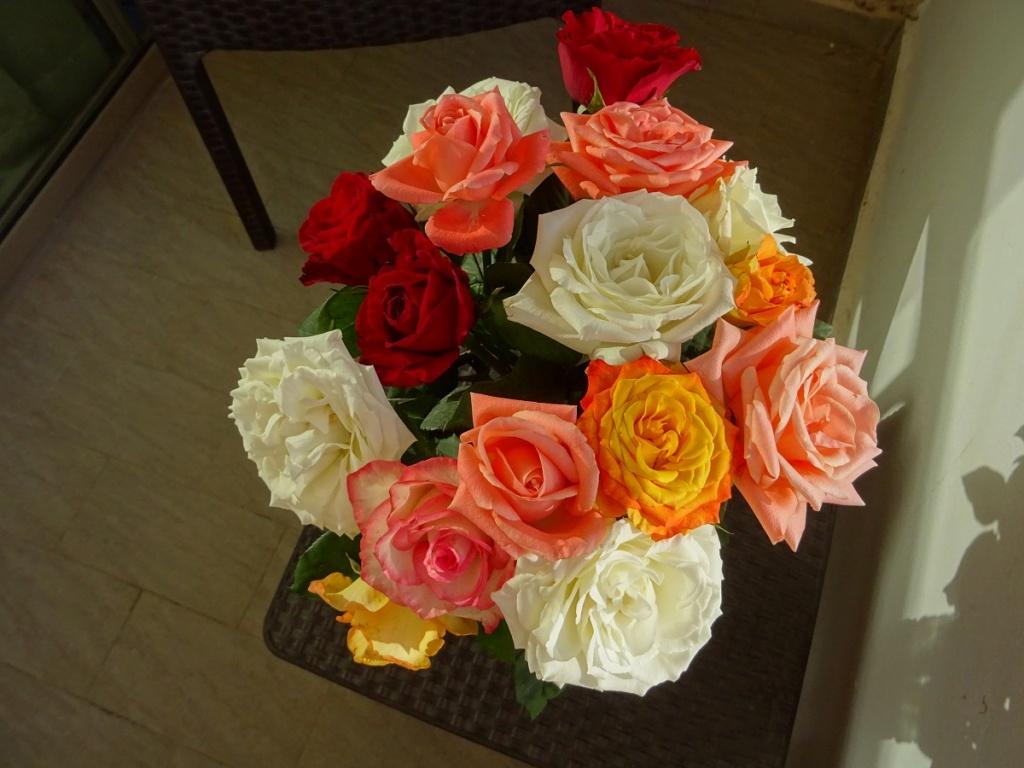 [LES B.A.N.] AGADIR - Page 23 Roses_12